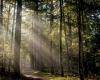 Veluwe bos natuur foto door fotograaf Grietje Mesman